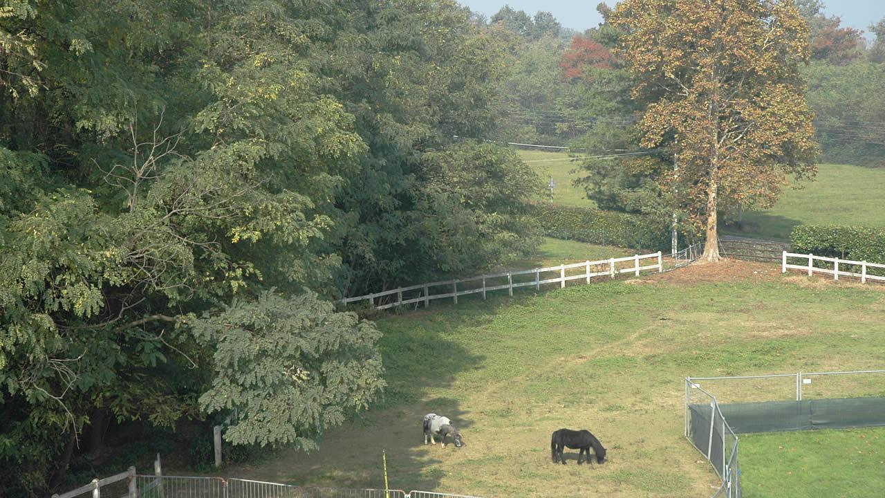 Centro Equestre Mottalciata - Home Page Slider 10