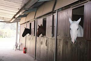 Centro Equestre Mottalciata - La Struttura Slide 03